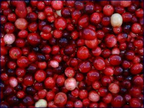 Sagamore Cranberries